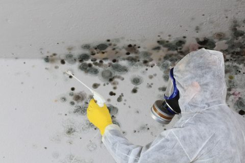 Man cleaning remove mold