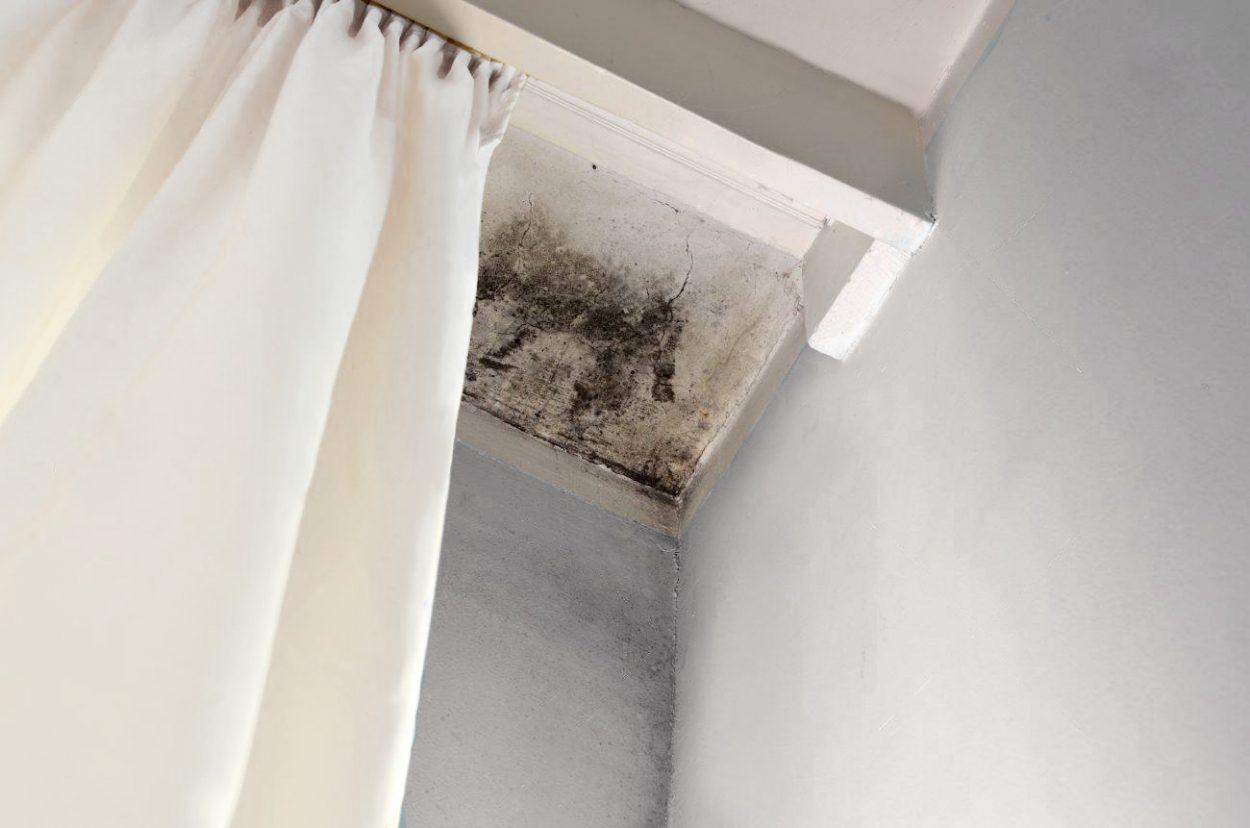 Mold hiding behind curtain